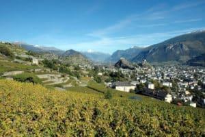 Vineyards in Lower Valais